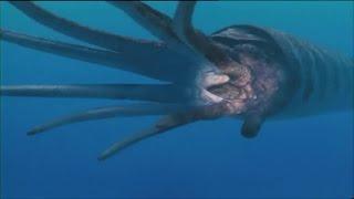 Приключения с морскими чудовищами Часть 1