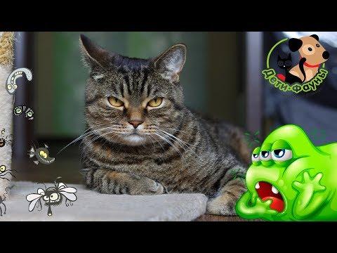 Чем можно заразиться от домашних животных, собак и кошек?
