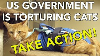 A Government Lab is Killing Cats. Let's SHUT IT DOWN!