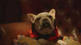 SquadUP Commercial - French Bulldog Throws A Poker Party