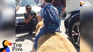 Bear Chained For Selfies Finally Runs Free + Animals Freedom Stories | The Dodo Top 5