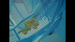 Honeycomb - Animal Collective