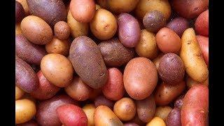 Первый картофель в 2018 году. Супер предложение