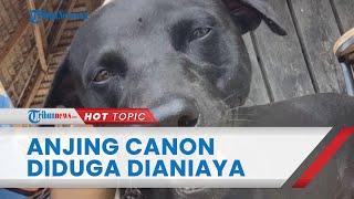 Bantahan Kasatpol PP & WH Aceh Singkil soal Penganiayaan Anjing Bernama Canon: Malah Kami Beri Makan