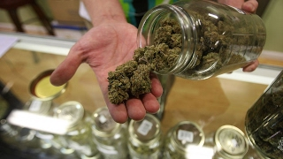 White House hints at legal weed crackdown