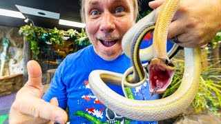 I GOT MY DREAM CAVE SNAKE!! ADDING THREE NEW SNAKES TO MY REPTILE ZOO!! | BRIAN BARCZYK