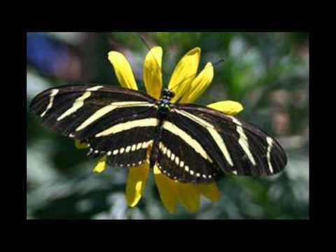 Free The Butterfly - Suzi Quatro.wmv