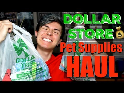 DOLLAR STORE PET SUPPLIES HAUL!!!