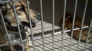 Western Riverside County/City Animal Shelter.mp4