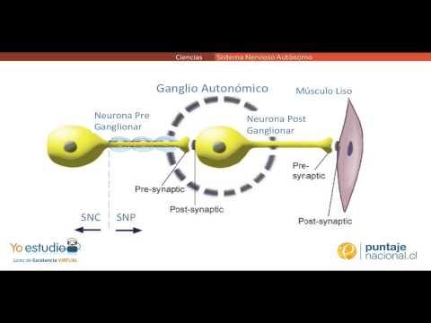 Isotónica e hipertónica