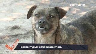 Безпритульні собаки атакують перехожих (Випуск 25) | Контролер