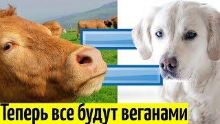 В России был принят Закон о Защите Животных (подробности)