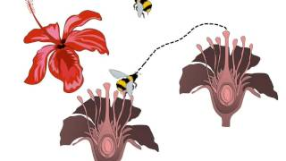 Science - What is pollination and what happens after it - English