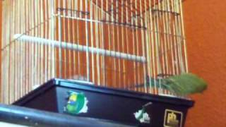 The Great Escape bird escaping her cage