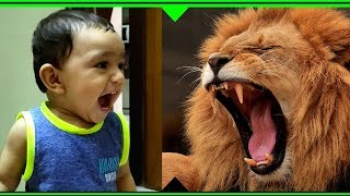 loud lion roar sound effect download - TH-Clip