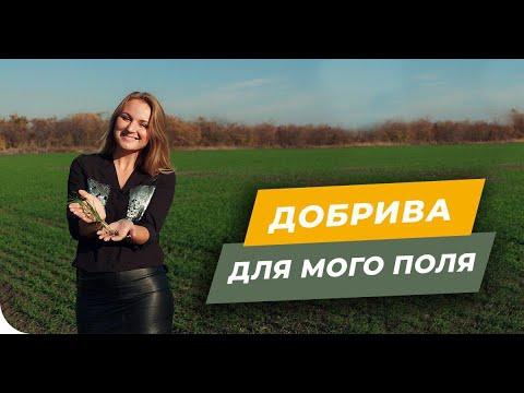Удобрения для моего поля. Система питания подсолнечника, кукурузы, пшеницы