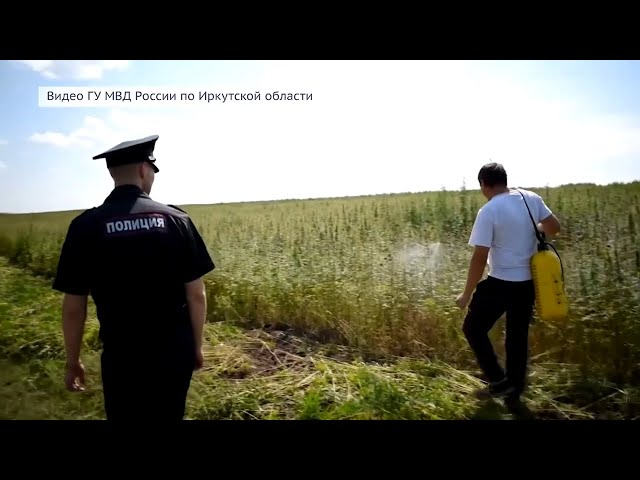 В Ангарске раскрыто 107 преступлений, связанных с наркотиками