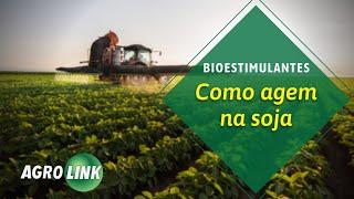 Os segredos do bioestimulante na soja