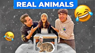 What's in the BOX Challenge with Real ANIMALS | Rimorav Vlogs