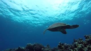 Sea Quest Divers Den 2018
