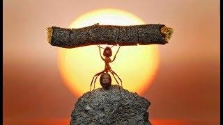 Смотреть онлайн Документальный фильм о жизни муравьев