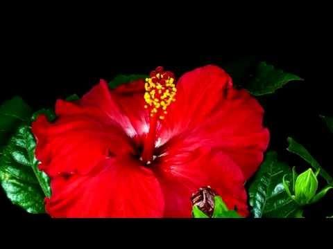 Alegre o seu dia com o desabrochar de belíssimas flores!