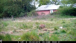 Fox cub !!!!
