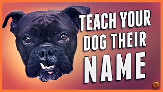 Teach Your Dog Their Name - Even Change a New Dog's Name!