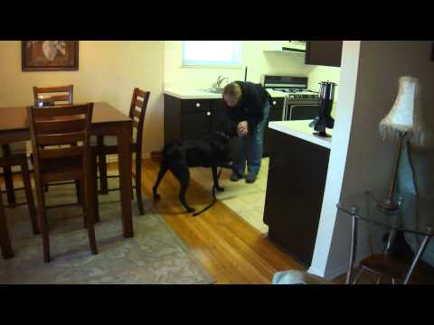 Using a Trained Dog to Detect Bed Bugs Video Screenshot