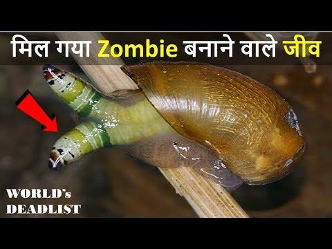 Les larves de ces parasites se développent dans leau