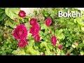 OnePlus 3T Camera Video Test! (4K @60Mbps!) *DAT BOKEH!*