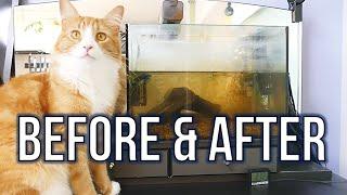 BEFORE AND AFTER | Jun's hair & fish tank