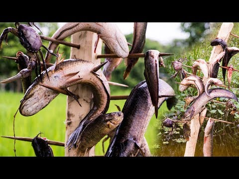 Unique Fish Trapping Using BIG STICK THORNS N Cooking | Life Of Natural Foods