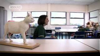 Career Advice on becoming a Veterinary Nurse by Shanade D (Full Version)