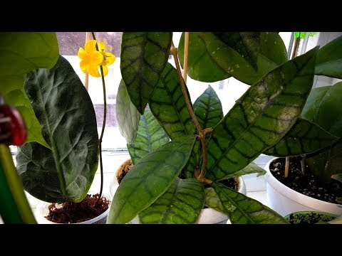 АНАПА Обзор моих цветочков