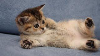 Добрые, веселые и смешные картинки про животных котов