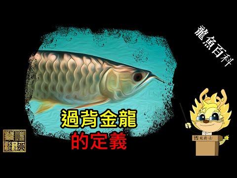 龍魚百科-過背金龍の定義(2019.10.12)