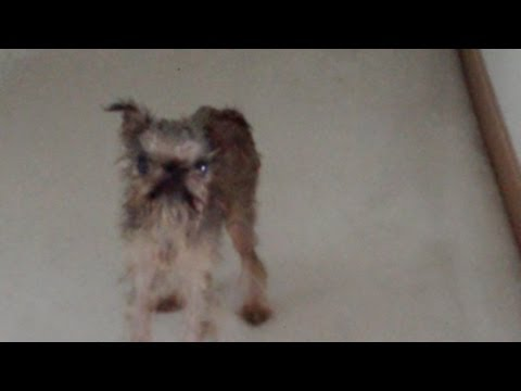Mokrý pes