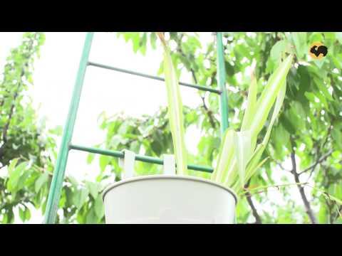 Зонирование сада с помощью арок. САД день за днем №29