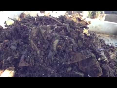 Giardia pagsusuri sa Kostroma