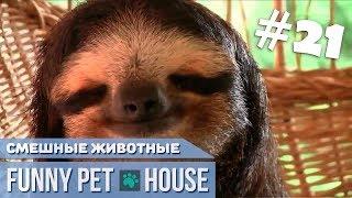 СМЕШНЫЕ ЖИВОТНЫЕ И ПИТОМЦЫ #21 НОЯБРЬ 2018 [Funny Pet House] Смешные животные