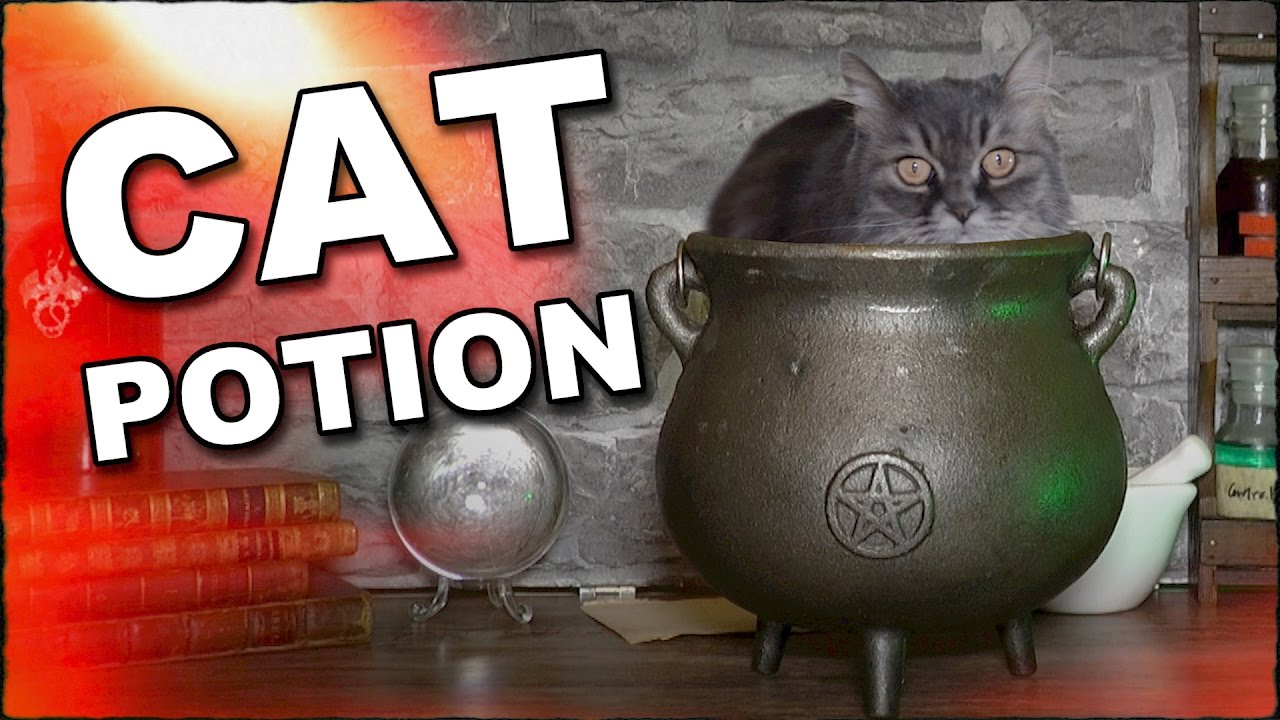 How Brew A Cat Potion