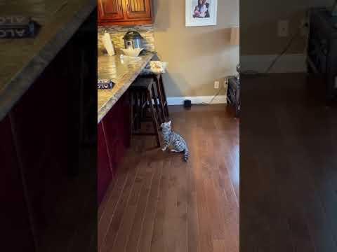 בסרטון הקצר והמצחיק הזה תגלו איך מונעים מחתולים לקפוץ על השיש...