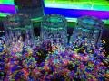 Blacklight UV-Reactive Neon F. | Video