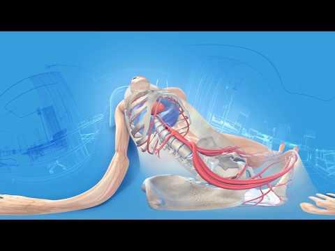 Kręgosłupa lędźwiowego kręgosłupa osteochondroza i zniekształcające kręgosłupa lędźwiowo