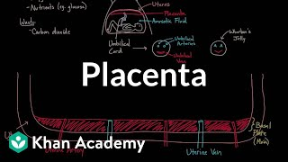 Meet the placenta! | Reproductive system physiology | NCLEX-RN | Khan Academy