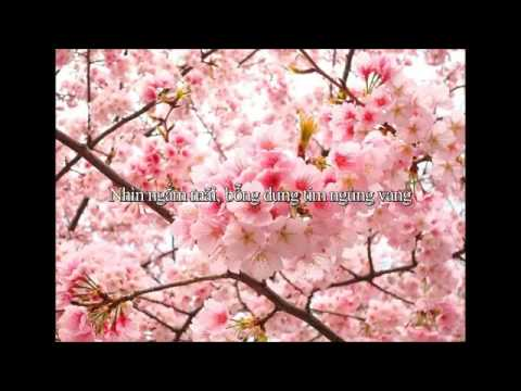 [Karaoke beat] Lời Việt yume to hazakura Giấc mơ xưa và cây diệp anh đào  Nhạc Nhật YouTube 360p | VnMyLife.Com