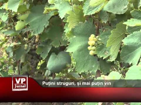 Puțini struguri, și mai puțin vin
