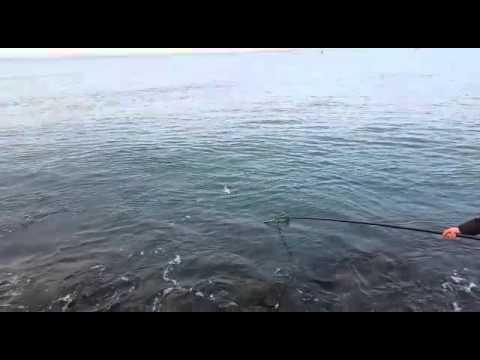La pesca su Irtysh secondo la licenza