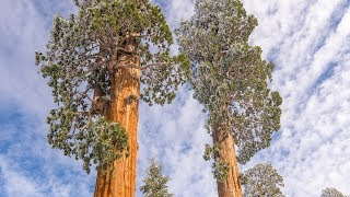 How much Alder Creek, the world's largest privately owned giant sequoia forest, costs